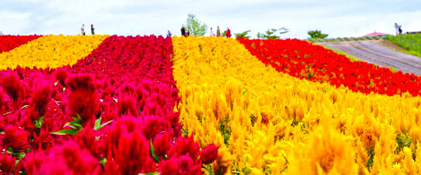 Flower Park at Furano